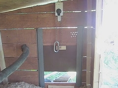 automatic chicken coop door closer chicken coop designs