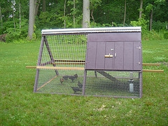 building portable chicken coops