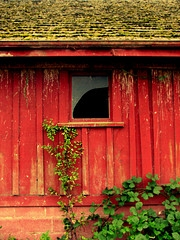 chicken coop barn