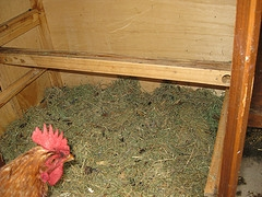 chicken coop bedding