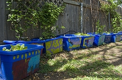 chicken coop bins