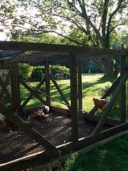 chicken coop connecticut