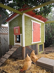 chicken coop design backyard