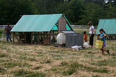 chicken coop designs free