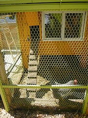 chicken coop designs plans