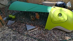 chicken coop eglu