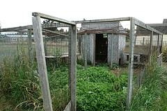 chicken coop fencing