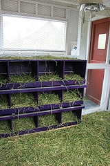 chicken coop nest boxes