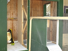 chicken coop nesting box size