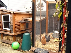 chicken coop setup