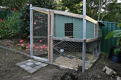 chicken coop sheds