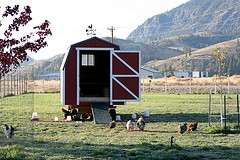 chicken coop to buy