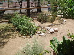 chicken coop tucson