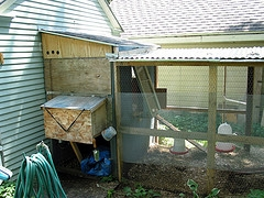 chicken coops 45 building plans