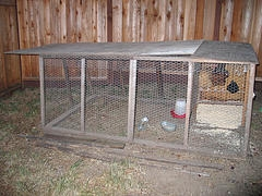 chicken coops backyard