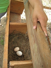 how to build small chicken coops