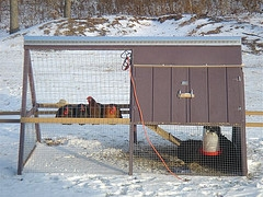 keep chicken coop warm