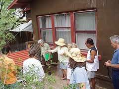 tucson chicken coop tour